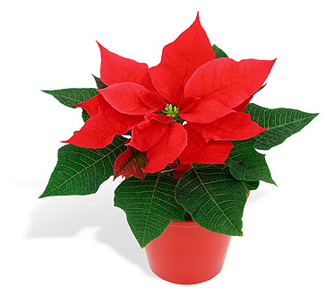 Home Depot Flawer Pascuas